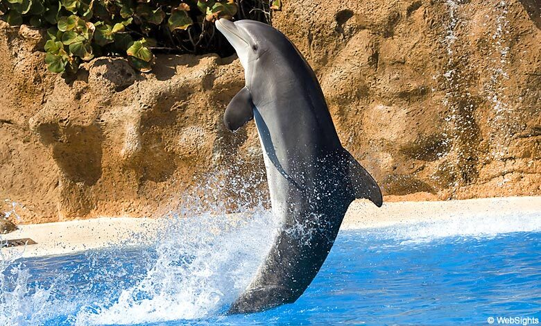 Loro Parque dolphin