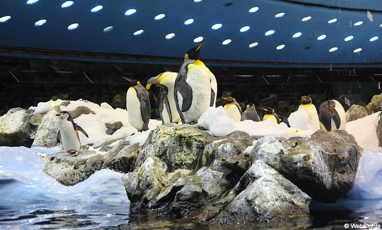 Loro Parque Pinguine